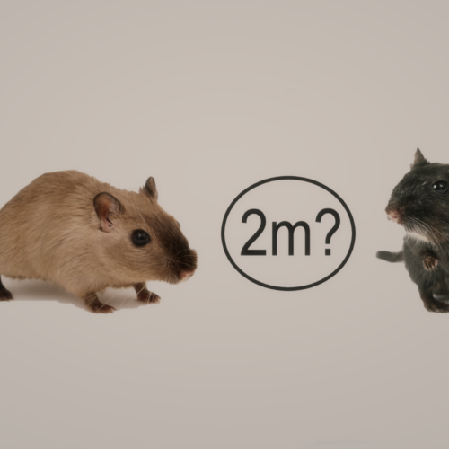 Why are Rodents So Social in Behaviour? – Terminix UK