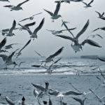 Seagulls Pest Control & Nest Removal Services