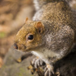 Squirrels Removal & Pest Control Services